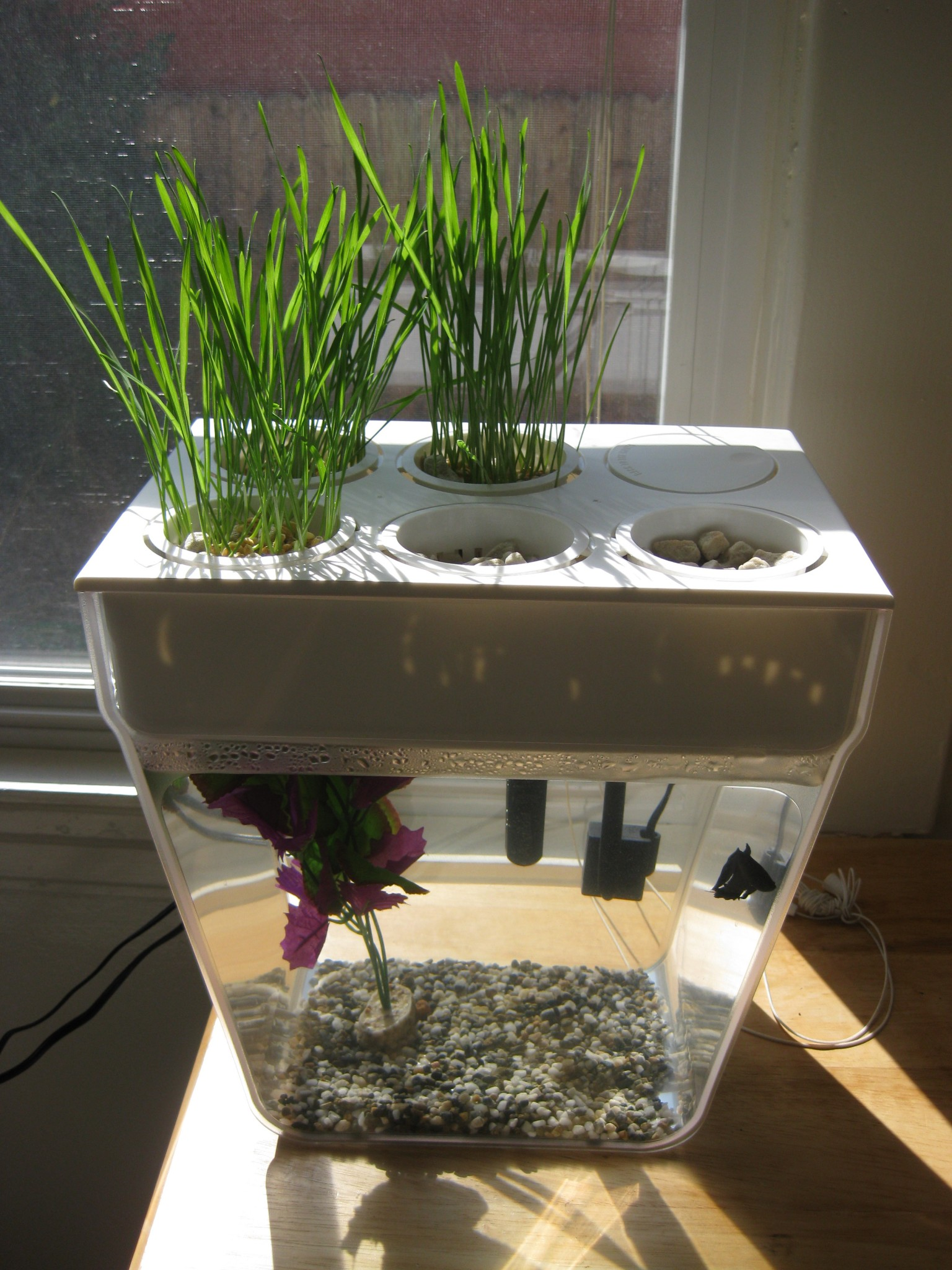 Aquaponics With The Back To The Roots Fish Tank